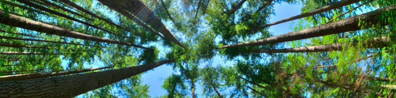 Vue sur une forêt d'arbres